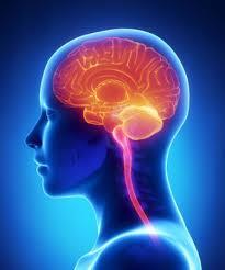 brain health 4_205
